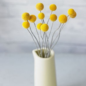 normal_yellow-billy-button-dried-flowers