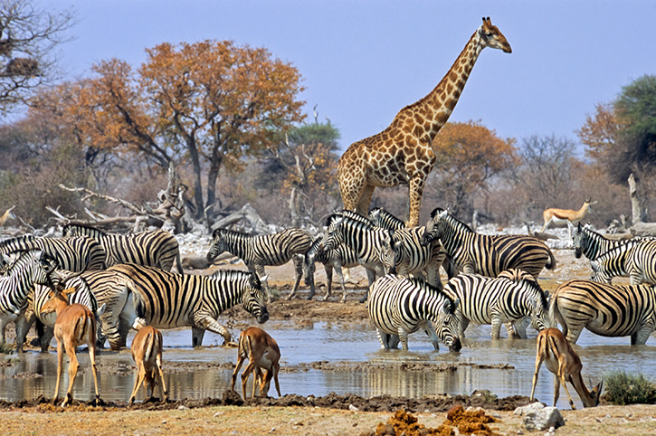 Breathtaking African Safaris
