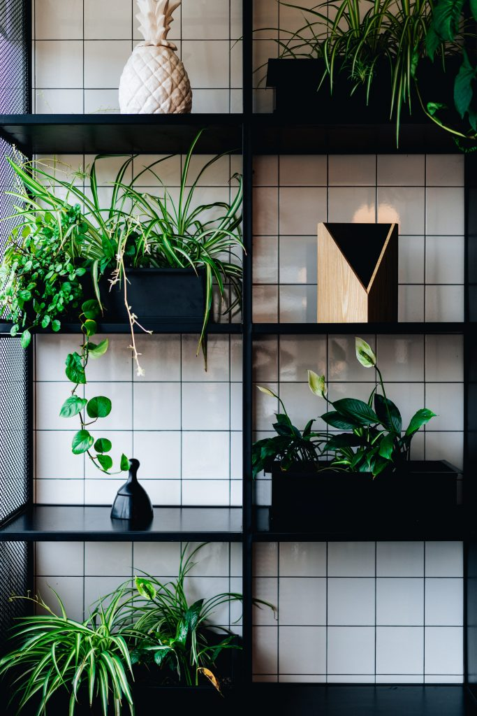 Include House Plants For A Affordable Way To Spruce Up Your Rooms